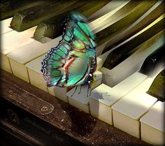 musical butterfly...what would it play?