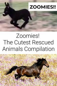 How cute are these rescued animals with the zoomies?!  ...  #rescuedanimals #animalsanctuary #animals #zoomies #cuteanimals Vegan Animals, Farm Animals, Cute Animals, Goat Farming, Vegan Life, Inspire, Things To Sell, Dogs, Pretty Animals