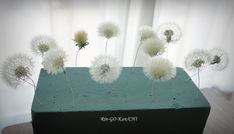 Pressed Flower Art, Uv Resin, General Crafts, Nature Crafts, Resin Crafts, Dried Flowers, Handicraft, Dandelion, Diy And Crafts