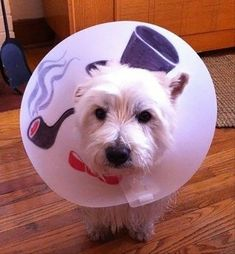 Okay, I laughed at these.   12+ Awesome Pet Cones That Your Pet Will Hate Even More