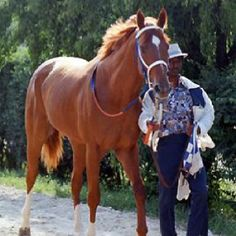 I love pictures of Secretariat with Eddie Sweat!
