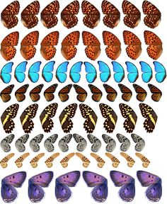 Detailed butterfly wings , printable for collage, altered art. mariposas