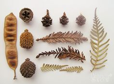dried collection