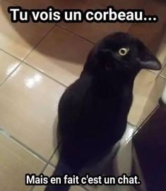 Funny animal pictures of the day. Here is the collection of top 28 latest really funny animal memes pictures that will make you LOL every time. Funny Animal Memes, Funny Animal Pictures, Cat Memes, Dog Pictures, Funny Animals, Cute Animals, Animal Quotes, Funny Memes, Really Funny