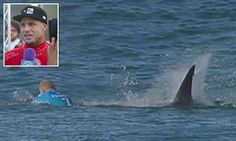 Surfer Mick Fanning escapes shark attack in South Africa - BBC News Shark Bait, Shark S, Shark Week, Mick Fanning Shark, All About Sharks, Great White Attack, Surf Competition, Surfing Pictures, Shark Pictures