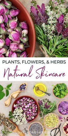 An introduction to herbs for skincare including plants & flowers to use for different skin types and conditions. Includes herbal skin care recipe ideas flowers Using Plants, Flowers, and Herbs for Skincare Herbal Remedies, Health Remedies, Natural Remedies, Beauty Care, Beauty Skin, Health And Beauty, Beauty Hacks, Healthy Beauty, Beauty Secrets