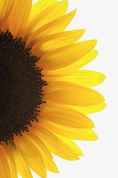27 Ideas For Flores Wallpaper Desenho Girassol Ipad Background, Beach Background, Wedding Background, Sunflower Pictures, Sunflower Art, Sunflower Drawing, Aesthetic Iphone Wallpaper, Aesthetic Wallpapers, Phone Backgrounds