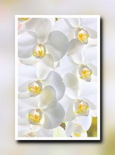 Nieuw in mijn Werk aan de Muur shop: Witte orchideeën in een frame