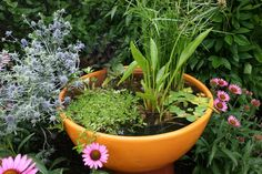 How To Make A Container Water Garden!