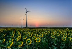 sunrise ower the sunflowers by Jozef Toth on 500px