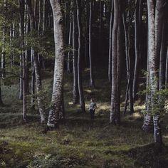 Mimese. #tb #intothewild #wood #rügen #sassnitz #kreidefelsen #königsstuhl #takemeback #wald #igersgermany #travelgram #wanderlust