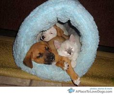 Funny Animal Pictures - View our collection of cute and funny pet videos and pics. New funny animal pictures and videos submitted daily. Funny Animal Videos, Funny Animals, Cute Animals, Love Pet, I Love Dogs, Unusual Animal Friendships, Anatole France, Silly Cats, Sleeping Dogs