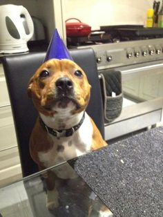 patient birthday boy waiting for his birthday cake.