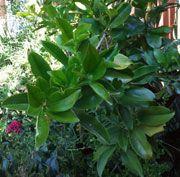 Grumicharma Sensory Garden, Grow Your Own Food, Outdoor Life, Children, Kids, Gardens, Fall, Plants, Blog