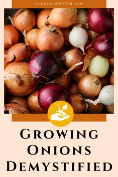Are you thinking about growing onions? You should learn about the many varieties of onions, and some of the main differences between them. In this blog post, you'll learn everything you need to know about growing onions demystifies. The best tips on gardening for beginners #plants #onions #gardening #gardeningtips #healthyplants #growingplants #growingvegetables #gardeningfever Season Fruits And Vegetables, Growing Vegetables Indoors, Organic Vegetables, Growing Plants, Gardening For Beginners, Gardening Tips, Fruit And Vegetable Diet, Types Of Onions, Planting Onions