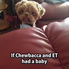 20 Funny Animal Humour Pictures #very #funny