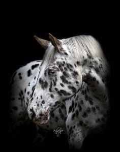 Black Series (c) door E-horse paardenfotografie