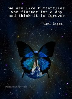 We are like butterflies who flutter for a day and think it is forever .. Carl Sagan