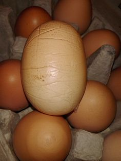 A fresh egg with wrinkles...