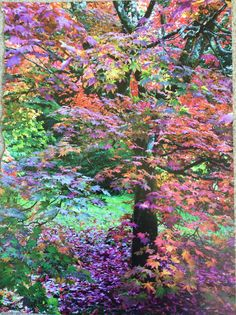 Colour scheme kitchen/family room - 'bright' autumn colours