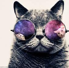 Výsledek obrázku pro cats hipster