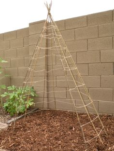Build a Teepee trellis - stakes and ropes. I think I'll do this for cucumbers, perhaps supporting the cukes with little hammocks
