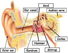 sense of hearing act
