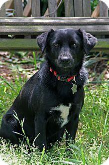 DFA RESCUE ACROSS THE NATION; Rescue info: Bella, a dog for adoption. http://www.adoptapet.com/pet/11454567-natchitoches-louisiana-border-collie-mix Natchitoches, LA