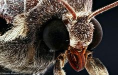 Macro Photography, Insects, Bee, Animals, Animales, Animaux, Bees, Animal, Bugs