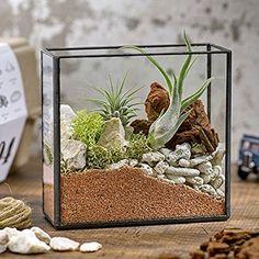 観葉植物 テラリウムキット 「グラスブラス (エアプランツ付き)」 インテリアグリーン 日比谷花壇