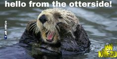 From the otterside...