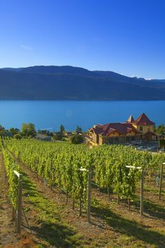 Gray Monk Estate Winery (Kelowna, BC) -- Curated by: Neufeld Jones Wine Vineyards, Canadian Travel, In Vino Veritas, France, Beach Hotels, Wine Country, Vacation Trips, Vacations, Places To See