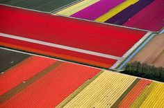 Holland's tulip fields from above. Gorgeous.