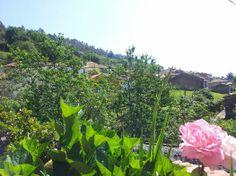Ya maduran las cerezas! buenas vistas desde Casa rural Generosa.
