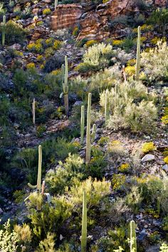 Sabino Canyon, Arizona; photo by Mitch Seaver