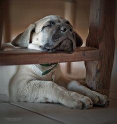 .sleepy head