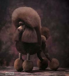 -Repinned- Poodle show trim.