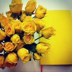 Lemony fresh! Yellow flowers mean friendshlp.