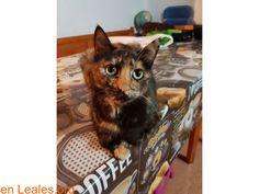 Gatos en adopción  España  Las Palmas - Gran Canaria  Las Palmas G.C. March 05 2018 at 07:41PM   TIGRITA BUSCA UN HOGAR!  #ADOPCIÓN  Contacto y Info: https://leales.org/animales-en-adopcion/gatos-en-adopcion/tigrita-busca-un-hogar_i3602 #Difunde en #LealesOrg un #adopta y sé #acogida para #AdoptaNoCompres O un #SeBusca de #perro o #gatos; #perdido o #encontrado ℹ #Adopta con #Faunario Tigrita castrada desparasitada hace dos meses. Dos años Te animas a darle un hogar? En todos los…