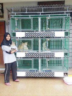 Diy Cat Enclosure, Outdoor Cat Enclosure, Reptile Enclosure, Cat Cages Indoor, Munchkin Cat Scottish Fold, Cat Fence, Cat Hotel, Pet Spa, Cat Run