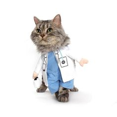 Paging Dr. This Halloween, your cat will have a Ph. in adorableness with this Doctor Cat Costume. Siamese Cats, Kittens, Doctor Cat, Cat Costumes, Costume Ideas, All About Cats, Halloween Cat, Halloween Christmas, Pet Clothes