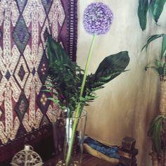 Allium, flor del ajo, o flor del Principito