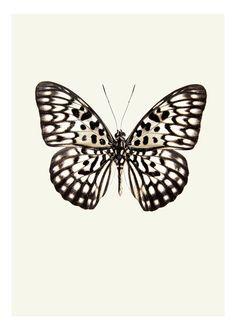 Schönes Vintage-Schmetterlingsposter. Im Format 30x40 abgebildet.