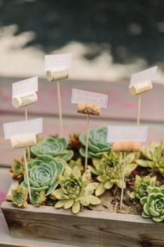 Wine cork escort cards displayed in succulents: http://www.stylemepretty.com/2014/12/05/boho-barn-wedding-in-napa/ | Photography: Matt Edge Wedding Photography - http://mattedgeweddings.com/: