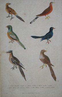 "martyn birds english 1785 hand coloured engraving   10 x 14"" $110 - 8"