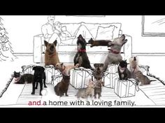The 12 Pets Of Christmas: A Video Featuring The 12 Christmas Wishes Of Homeless Pets