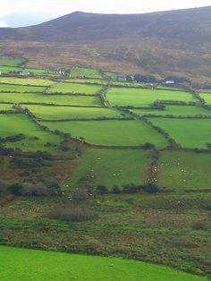 Ireland truly is the emerald isle . greener than I ever imagined it would be. After a good rain, the sun came out and hills just glowed . Love Ireland, Ireland Travel, Galway Ireland, Ireland Vacation, Dublin, Places To Travel, Places To See, Linderhof, Ireland Homes