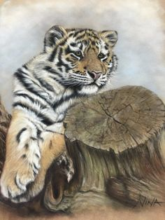 """Tiger cub"" by Nina Worrall. Pastels on velour paper 12""x10"" the reference photo is from Wildlife reference photos, fell in love with the picture just had to paint it."