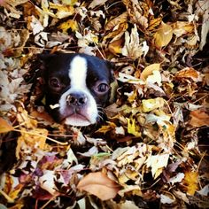 Baby in the fall leaves
