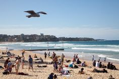 Sun, Surf & Ice Cream at Manly: The Best Sydney Beaches With Kids Great Places, Places To See, Beautiful Places, Travel Guides, Travel Tips, Travel Destinations, Travel With Kids, Family Travel, Places Around The World